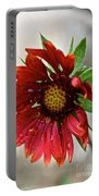 Teary Gaillardia Portable Battery Charger