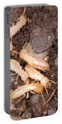 Termite Nest Reticulitermes Flavipes Portable Battery Charger by Ted Kinsman
