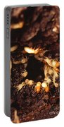 Termite Nest Portable Battery Charger by Science Source