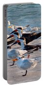 Terns Portable Battery Charger