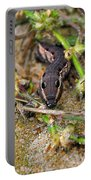 Tersa Sphinx Caterpillar Portable Battery Charger