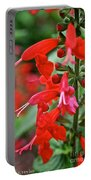 Texas Sage Portable Battery Charger
