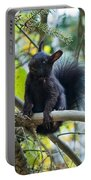 The Black Abert's Squirrel Portable Battery Charger