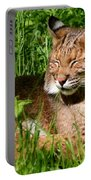 The Bobcat's Afternoon Nap Portable Battery Charger