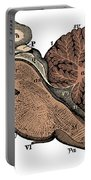 Third And Fourth Ventricles Of The Brain Portable Battery Charger