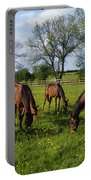 Thoroughbred Horses, Yearlings, Ireland Portable Battery Charger
