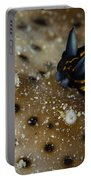 Tiny Nudibranch On Sea Cucumber Portable Battery Charger