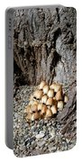 Toadstools In The Gravel Portable Battery Charger by Will Borden