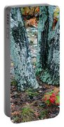 Tree Trio In Lichen At Hawn State Park Portable Battery Charger