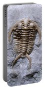 Trilobite Portable Battery Charger