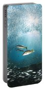 Trio Of Snappers Hunting For Bait Fish Portable Battery Charger