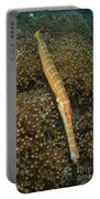 Trumpet Fish, Lembeh Strait, Bitung Portable Battery Charger