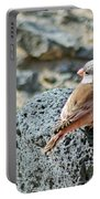 Trumpeter Finch Portable Battery Charger
