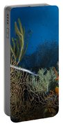 Trumpetfish, Belize Portable Battery Charger