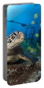 Turtle And Sealife Portable Battery Charger