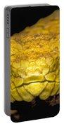 Usambara Eyelash Bush Viper Portable Battery Charger