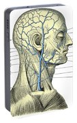 Veins Of The Head And Neck Portable Battery Charger