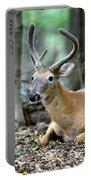 Velvet Buck At Rest  Portable Battery Charger