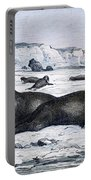 Walruses On Ice Field Portable Battery Charger