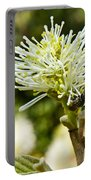 Wasp On Fothergilla 1 Portable Battery Charger