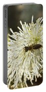 Wasp On Fothergilla 5 Portable Battery Charger