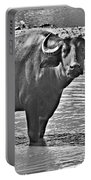 Water Buffalo In Black And White Portable Battery Charger