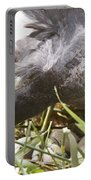 Waterhen Coot On Nest With Eggs Portable Battery Charger
