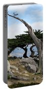 Weathered Tree On California Coast Portable Battery Charger