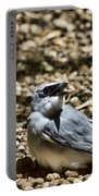 White-bellied Cuckoo-shrike Portable Battery Charger
