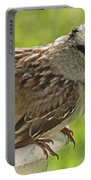 White Crowned Sparrow Sends A Warning Portable Battery Charger