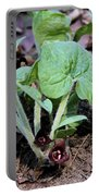 Wild Ginger Portable Battery Charger