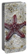 Wonder Star Fish Portable Battery Charger