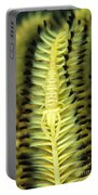 Yellow Commensal Shrimp On Crinoid Portable Battery Charger