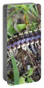 Yellow-spotted Millipede - Harpaphe Haydeniana Portable Battery Charger