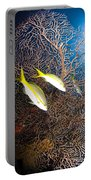 Yellowtail Snappers And Sea Fan, Belize Portable Battery Charger