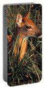 Young Deer Laying In Grass Portable Battery Charger