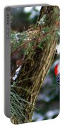 Young Red-bellied Woodpecker Portable Battery Charger