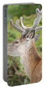 Young Red Deer Portable Battery Charger
