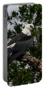 Young Swallow-tailed Kite Portable Battery Charger