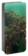 Zebra Mussels Portable Battery Charger