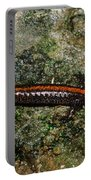 Zig-zag Salamander Portable Battery Charger