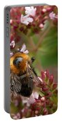 Cuckoo Bumblebee 2 Portable Battery Charger