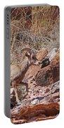 Escalante Canyon Desert Bighorn Sheep  Portable Battery Charger