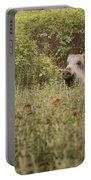 Wild Boar Sus Scrofa Portable Battery Charger