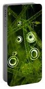 Algae Spirogyra Sp., Lm Portable Battery Charger