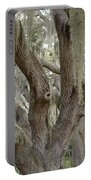 Angel Oak With Spanish Moss 2 Portable Battery Charger