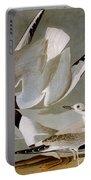 Audubon: Gull Portable Battery Charger