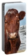 Beautiful Brown Cow On The Burren In Ireland Portable Battery Charger