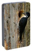 Black-backed Woodpecker Portable Battery Charger