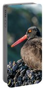 Black Oystercatcher Portable Battery Charger